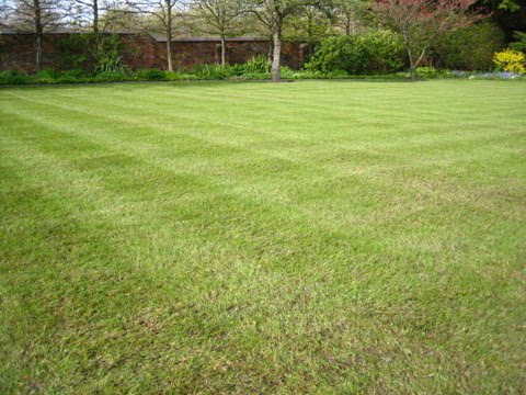 Lawn care eco garden maintenance for Garden care maintenance