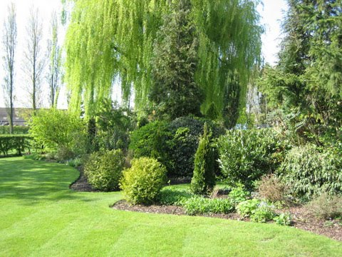 Diving border with willow tree