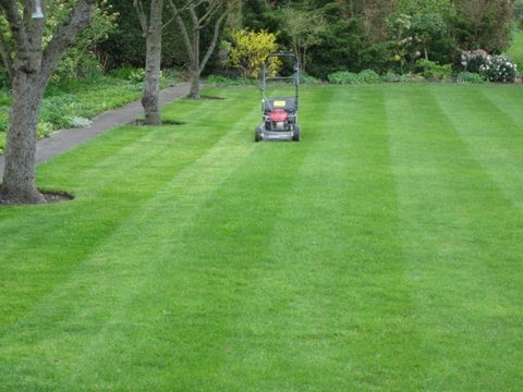 Honda Pro roller mower_large country garden