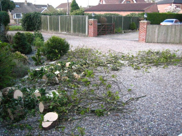 Professional_tree_surgery_and_pruning_by_Eco_Garden_Maintenance_in_the_Leeds_York_Selby_Wetherby_and_Tadcaster_areas.