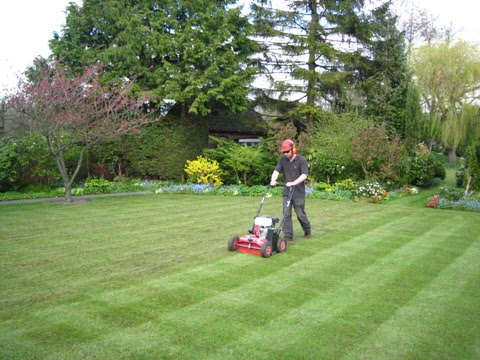 Lawn_care_and_scarifying_by_Eco_Garden_Maintenance_in_the_Leeds_York_Selby_Wetherby_and_Tadcaster_areas.